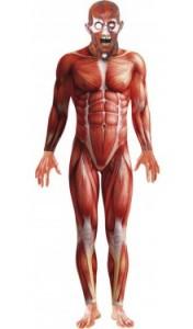 Morphsuit Anatomie