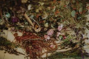 Kräuter und Blütenmischung