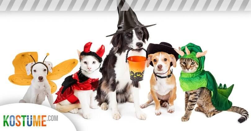 Tiere im Kostüm